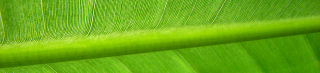 Alam Aksara header image 3